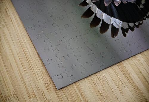 Hoopoe,Feeding.. jigsaw puzzle
