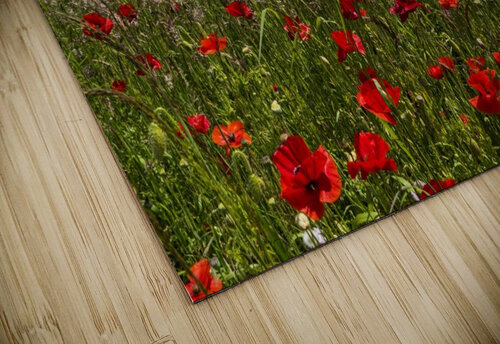 Souter Lighthouse with a field of red poppies in the foreground; South Shields, Tyne and Wear, England jigsaw puzzle