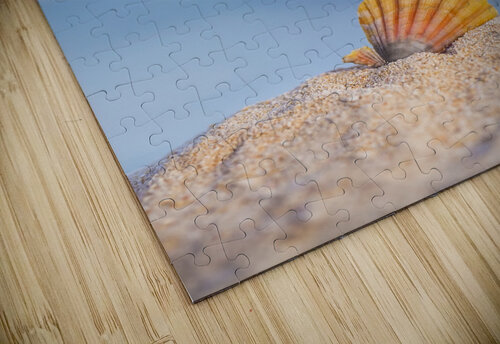 A rare rainbow color Hawaiian Sunrise Scallop Seashell, also known as Pecten Langfordi, in the sand at the beach at sunrise; Honolulu, Oahu Hawaii, United States of America jigsaw puzzle