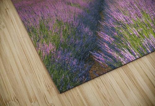 Velours de Lavender jigsaw puzzle