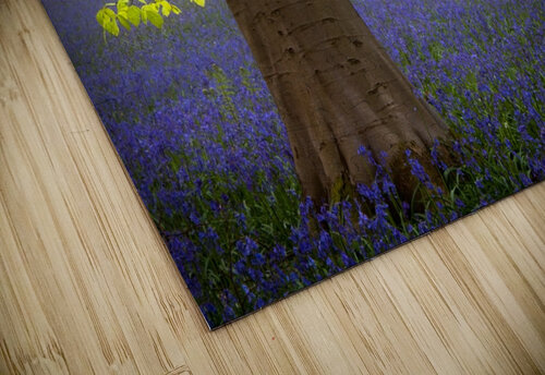 Spring........... jigsaw puzzle