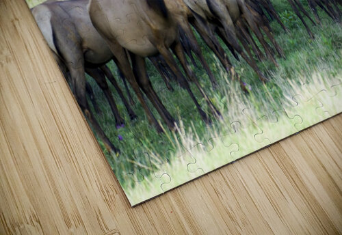 Elk Red Tailed Deer or Wapiti 16 jigsaw puzzle