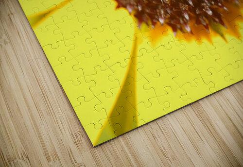 Brown eyed Susan Macro jigsaw puzzle
