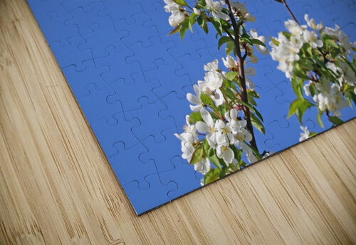 Oriole And White Blossoms jigsaw puzzle