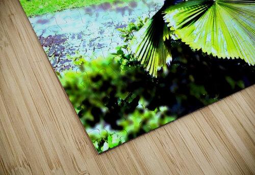 BO902 - Licuala peltata Leaves jigsaw puzzle