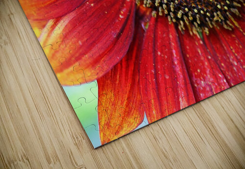 Red Sunflower With Yellow Tips jigsaw puzzle