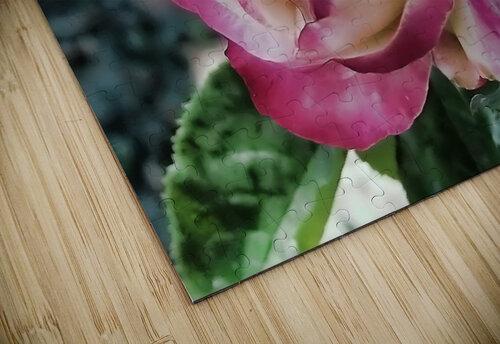 Lavender Rose jigsaw puzzle