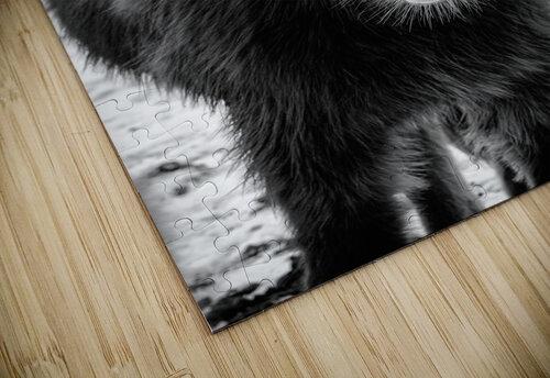 Icelandic Foal jigsaw puzzle