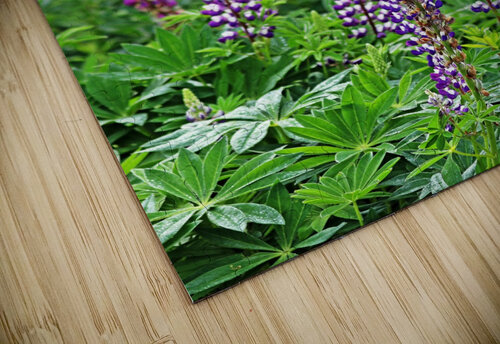 Shades Of Purple Lupine jigsaw puzzle