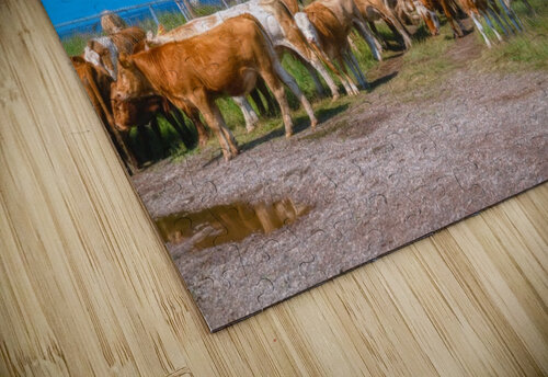 New Occupants jigsaw puzzle