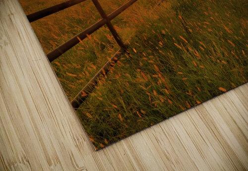 Cattle Pens Morning Sunburst jigsaw puzzle