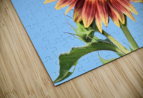 outstretched jigsaw puzzle