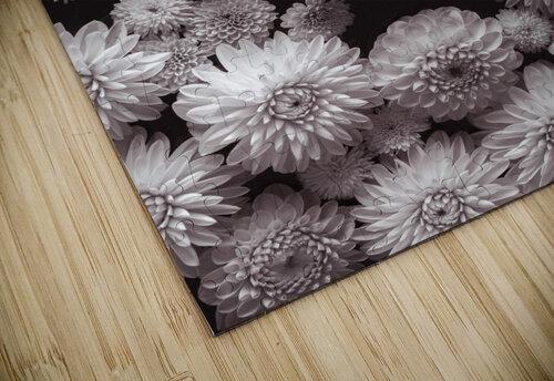 Dahlia Flowers, Full Frame jigsaw puzzle