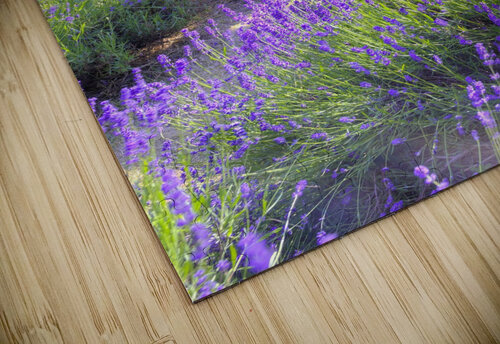Bench in Lavender field jigsaw puzzle