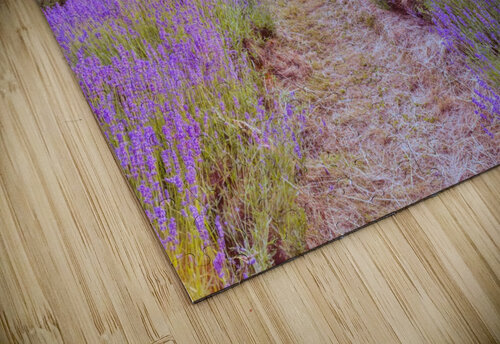 Lavender field at sunset jigsaw puzzle