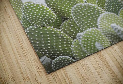 Cactus plant jigsaw puzzle