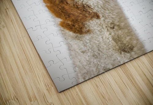 Close-up of Alpaca jigsaw puzzle