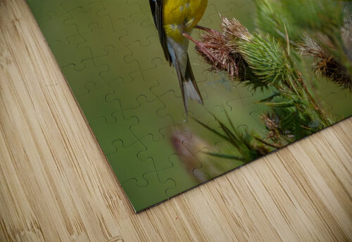 Goldfinch Male jigsaw puzzle