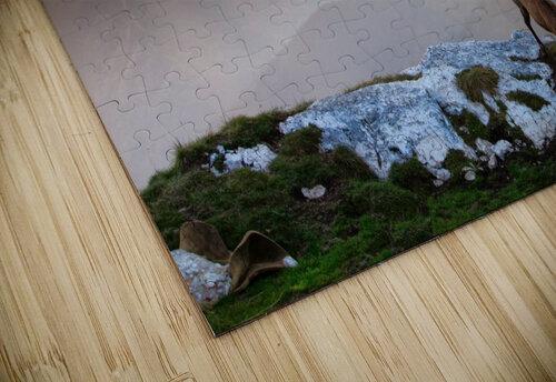 Chamois in Piatra Craiului Romania jigsaw puzzle