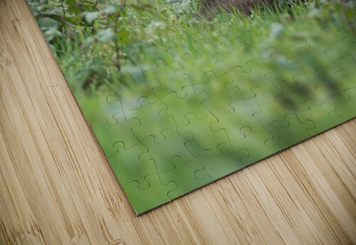 Grizzly Bear jigsaw puzzle