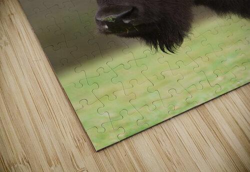 North American Buffalo jigsaw puzzle