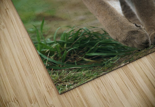 North American Cougar jigsaw puzzle