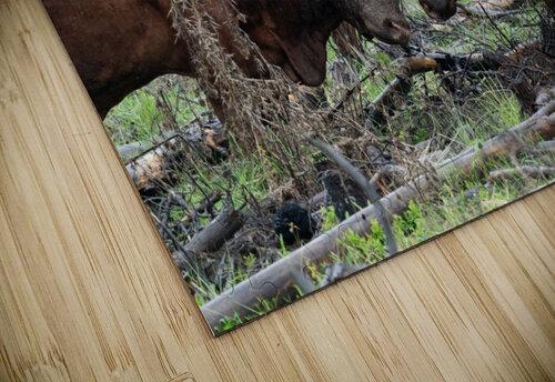 Bulls jigsaw puzzle