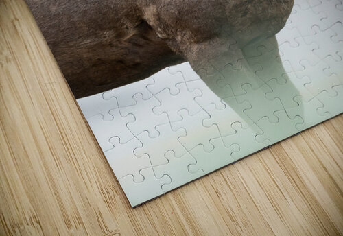 Bighorn Sheep jigsaw puzzle