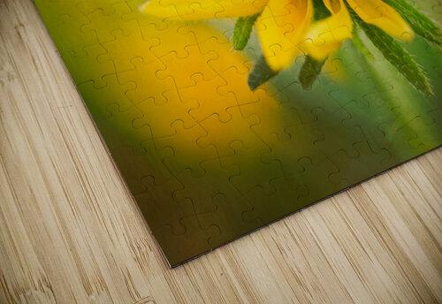 Brown Eyed Susan jigsaw puzzle