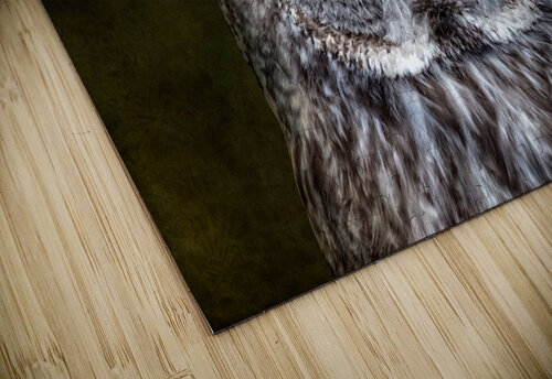 Stare Down with a Great Grey Owl jigsaw puzzle