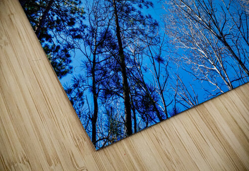 Towering Trees Bright Blue Sky jigsaw puzzle
