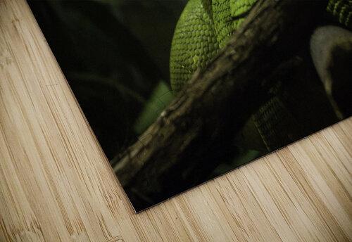 High Detail  Green Boa  jigsaw puzzle
