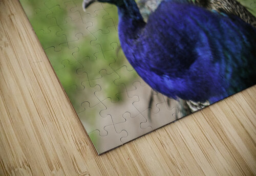 His and Hers  Peacock  jigsaw puzzle