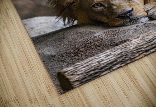 Connection  Lion  jigsaw puzzle