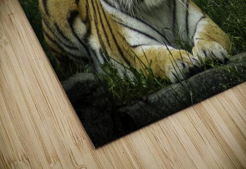 Next Strike  Tiger  jigsaw puzzle