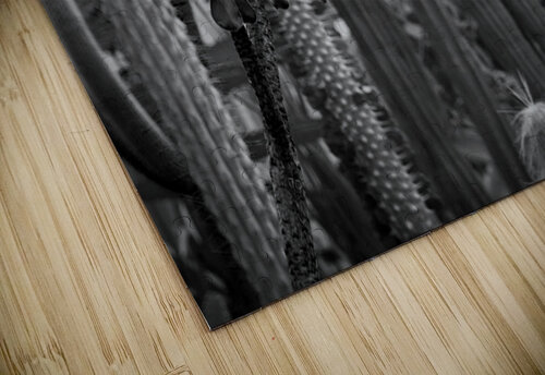 Desert in Black White jigsaw puzzle
