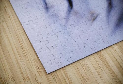 Speed Skating 1 jigsaw puzzle