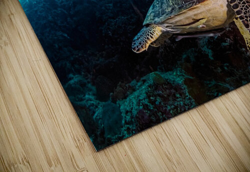 Turtle and Sardines jigsaw puzzle