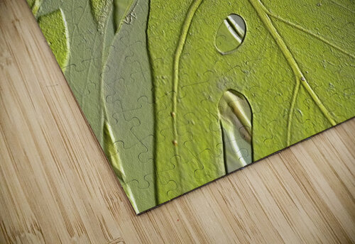 Leaf Texture Background jigsaw puzzle