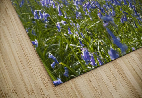 Bluebells On Forest Floor jigsaw puzzle