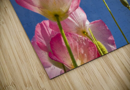 Shirley Poppies jigsaw puzzle
