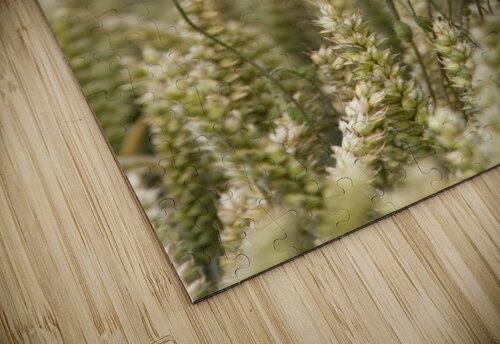 Wildflowers; Poppies In A Grain Field jigsaw puzzle