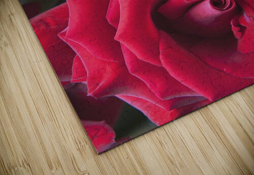 Red Roses; Quebec, Canada jigsaw puzzle