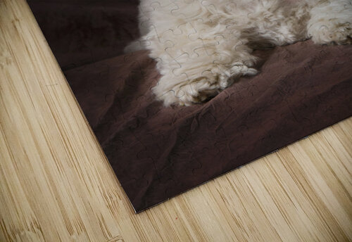 Shih Tzu-Poodle On A Brown Muslin Backdrop jigsaw puzzle