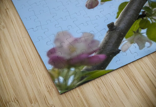 Pink and white crabapple flowers against a blue sky; Toronto, Ontario, Canada jigsaw puzzle