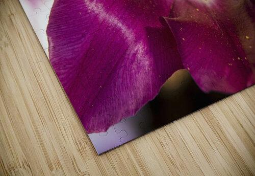 Red tulip, Andre Rieu (tulipa), New York Botanical Garden; New York City, New York, United States of America jigsaw puzzle