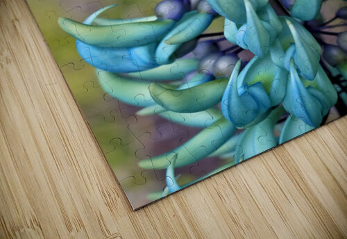 Blue jade plant; Hawaii, United States of America jigsaw puzzle