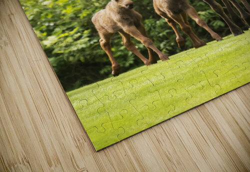 A cow moose (alces alces) with her calves on green grass with lush green foliage; Anchorage, Alaska, United States of America jigsaw puzzle