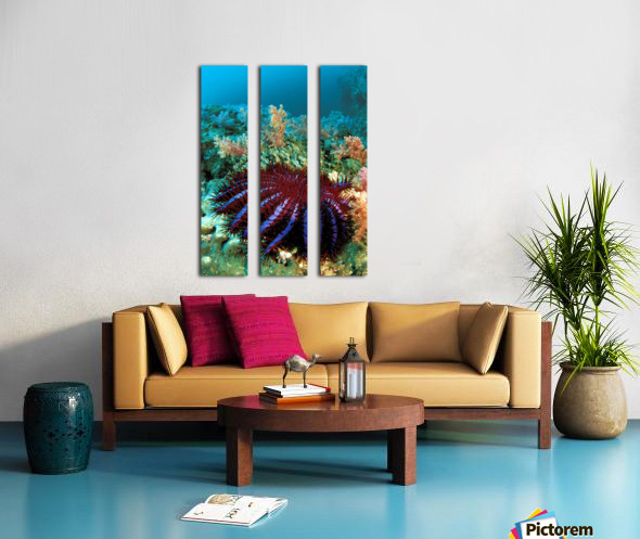 Thailand, Reef Scene With Crown-Of-Thorns Starfish (Acanthaster Planci). Split Canvas print