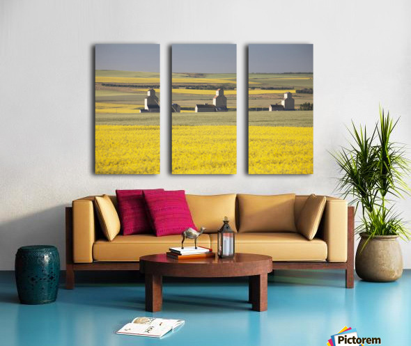 Three Old Wooden Grain Elevators At Sunrise With Flowering Canola Fields In The Foreground And Background; Mosleigh, Alberta, Canada Split Canvas print